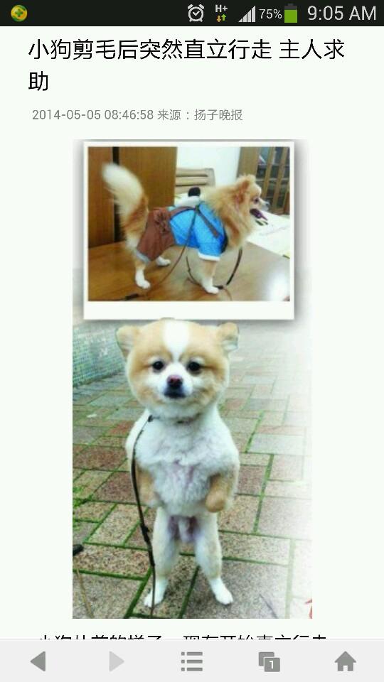 笑喷了  宠物医生说 狗剪完毛 伤自尊 抑郁了