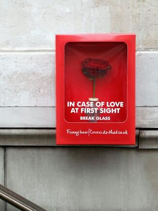 如果偶遇爱情,请打碎它。
