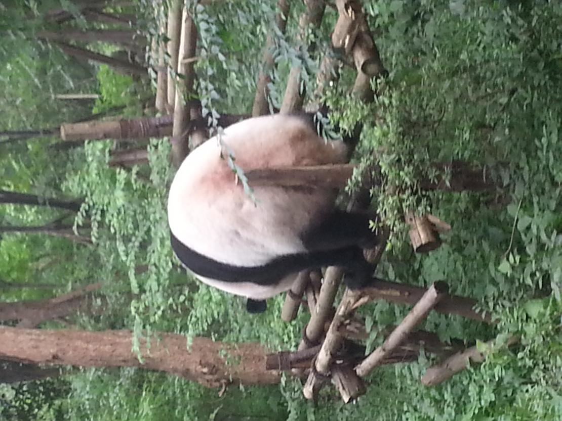 这大熊猫看不下去了