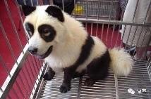 看我新买的大熊猫