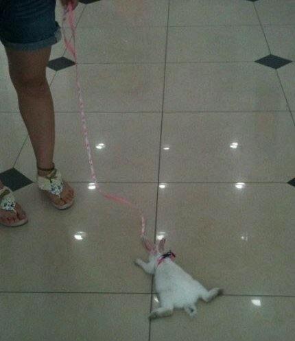 溜狗的 溜猫的 溜猪的  你在商场溜兔子 你家人知道 你这是闹哪样
