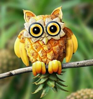 菠萝毛头鹰~是法国一名设计师创造的>:-<