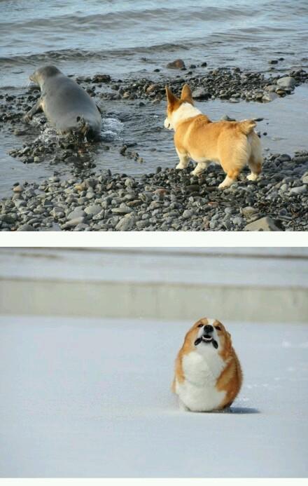 海狗小黑与他的小伙伴大黄。。。