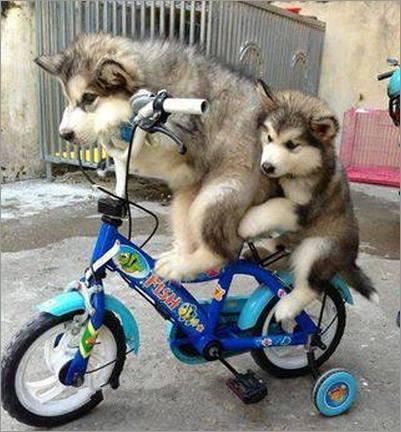 爸爸,爸爸,我们去哪里呀~