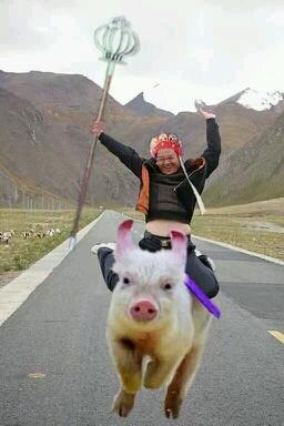 騎著豬向錢沖、、、、、、、、、、、、、、、、、、、、、、、、、、、、、、、、、、、我要~飛鍀~更高。。。。。。。。。。。。。。。