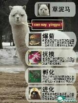 神级宠物,拥有它战斗力至少要增长250+++