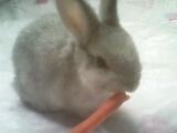 """昨天生日,生日礼物居然收到一只兔子!请问:我可以给它取名叫做""""冷兔""""么?真的好冷啊…………"""