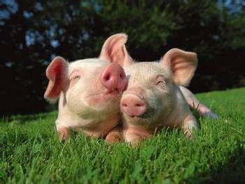 你不快乐是因为你可以像只猪一样懒,却无法像只猪一样懒得心安理得。。。
