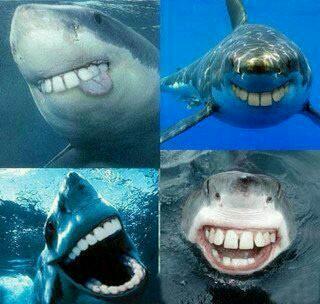 有人问为什么鲨鱼的牙都是尖的,有人答:因为如果不是尖的,鲨鱼看起来会特2b!