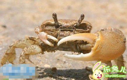 去海边玩,捡到一只螃蟹,仔细看了下就放生了,屌丝何苦为难屌丝,唉
