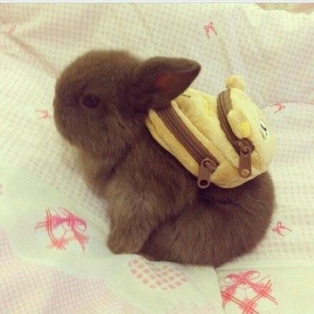 当冷兔背上书包时,萌哭了,有木有?!!