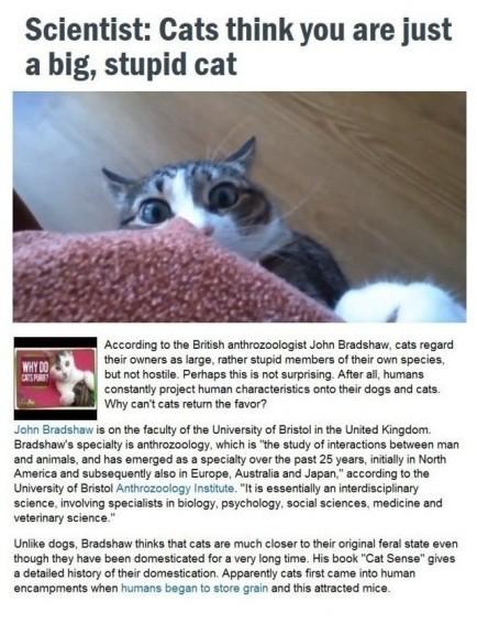 英国布里斯托大学动物关系学家John Bradshaw研究发现,和狗不同,猫很难驯化,而且在猫眼里,主人只是一只会给它吃的,没有恶意的,体型硕大的,傻逼猫。。。你以为你家喵星人跟你很亲,其实在它眼里,你根本就不是它的主人。。而且还傻逼。。【挖鼻屎 (net)