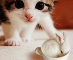 兔子別躲了,看见耳朵了!