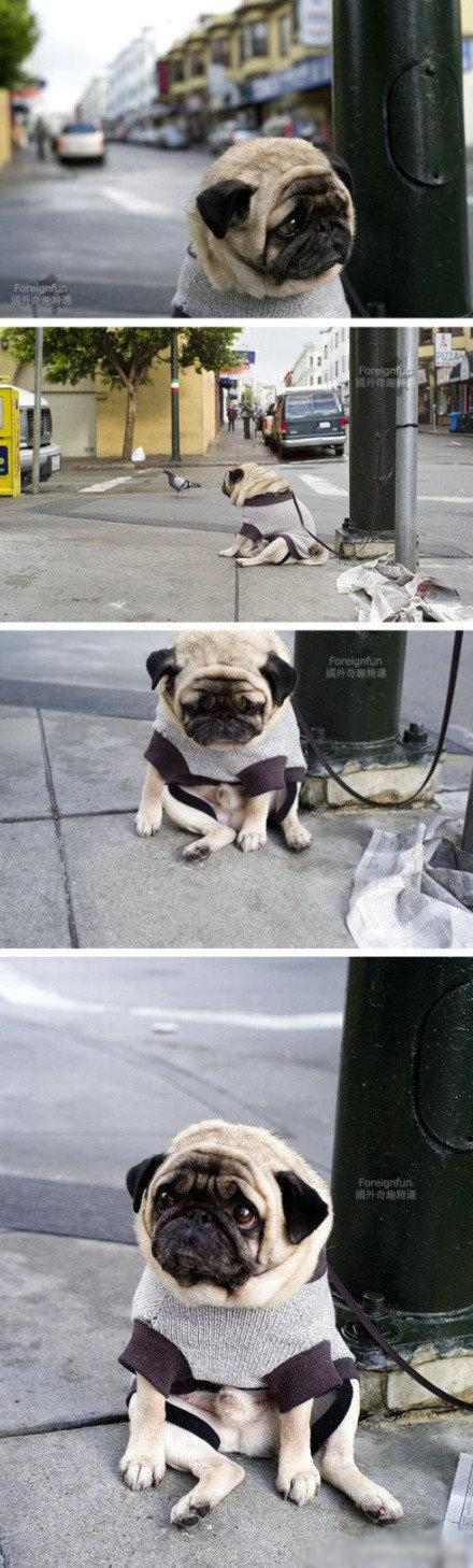 """世界上""""最忧伤的狗""""照片网上蹿红,忧伤到了极点!!!![可怜]"""
