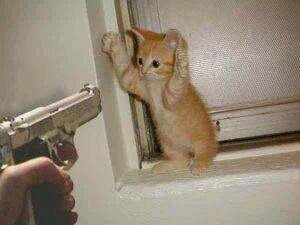 老大、别这样子、放下枪我们好好说不可以么……