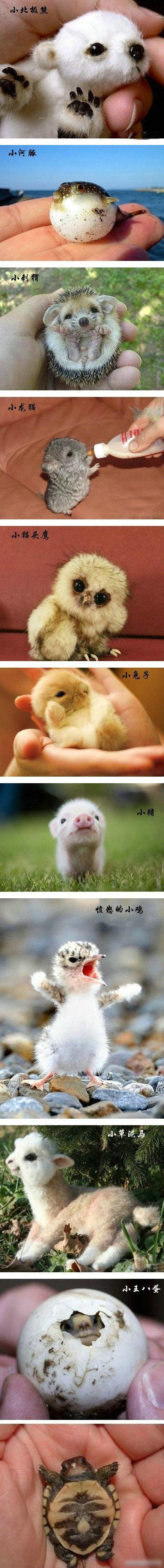 动物刚生出来的样子,你肯定是没见过 !