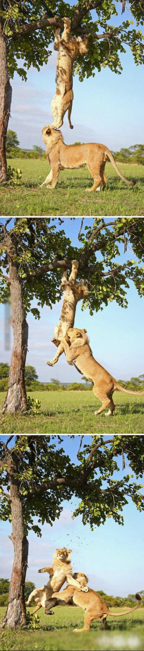 孩子,大树不是你想爬,想爬就能爬的啊~