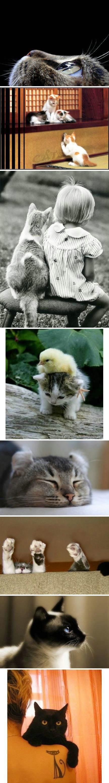 人要向猫学习:有人陪着玩,就热情地玩闹;没人陪着,自己high;有猫粮吃尽情享用,没吃的自己游走取食。能开心,善孤独;九条命,超坚韧。「转」