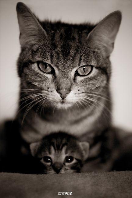 人,即使活到八九十岁,有母亲便可以多少还有点孩子气。失了慈母便像花插在瓶子里,虽然还有色有香,却失去了根。有母亲的人,心里是安定的。——老舍