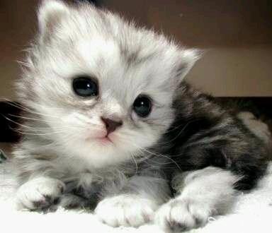 小莫家的猫咪,觉得可爱滴就来个笑脸呗~