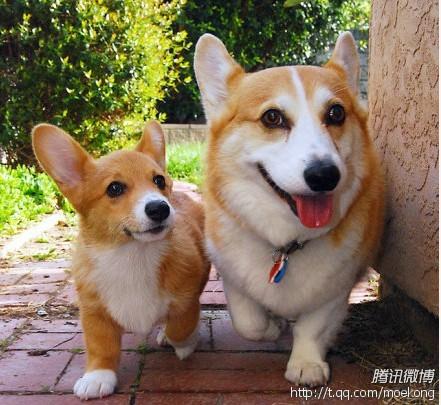 儿子:爸爸你真的带我去找好吃的?爸爸:嗯,骗你是小狗……