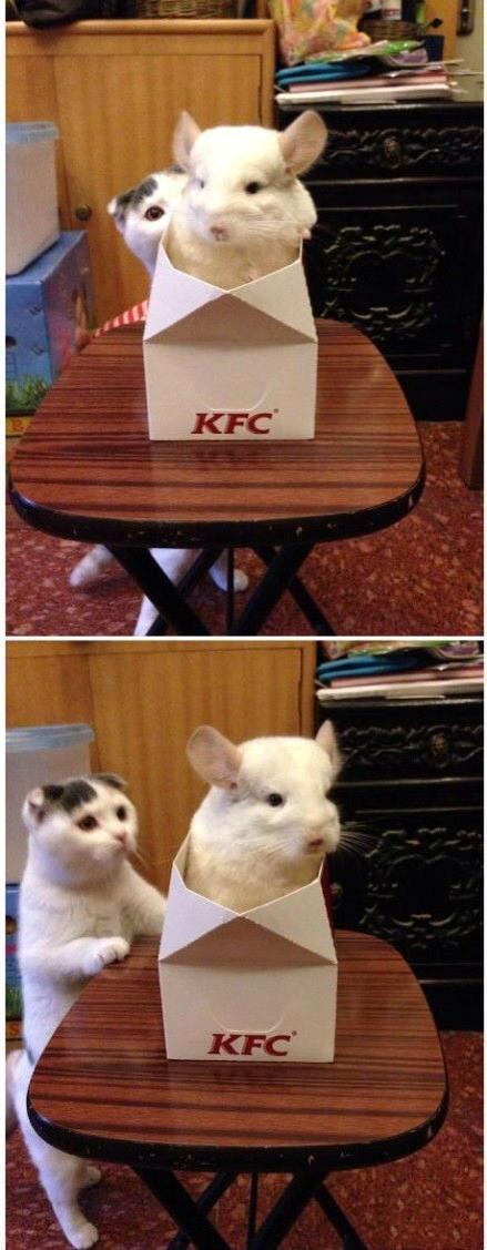 没见过这么大只的老鼠,我要蛋定。。。(net)