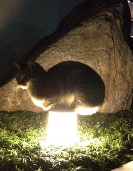 同学,擦一擦你家院子里的灯好么?都长猫了你看到了没有?