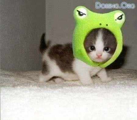 我家的猫咪,觉得可爱的赞一个!!!
