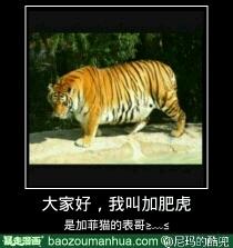 我是加菲猫的小伙伴加菲虎。。。