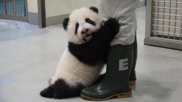 我为动物园立过功,我为游客卖过萌,你不能这样对我!!!我要见园长!我要见园长!
