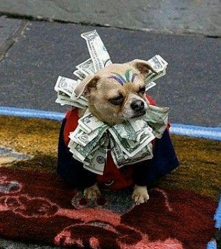 土豪家的狗