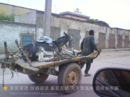 我有一只小毛驴,我从来都不骑~