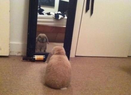 9gag网友说,她家的兔子,整天蹲在镜子前。她也不确定,它在想什么。