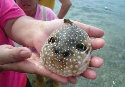 这是我看过最丑的动物…话说…这叫什么来着?