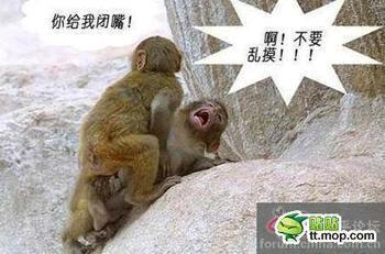 猴子的世界你不懂……