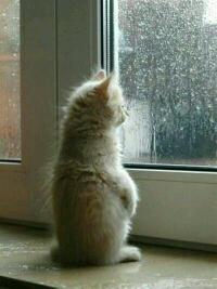 你若安好,便是晴天,按这天气看来,你应该是挂了。。