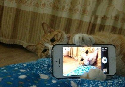睡前一定要拍照发微博