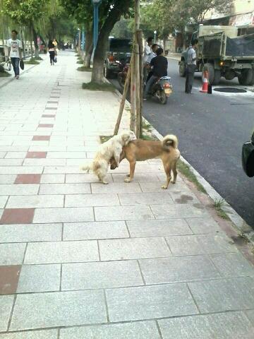 突然明白狗为什么会站着走…………………!!!!!