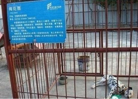 尼玛,县里的动物园就是坑爹,欺负我们没见过狗啊!!!
