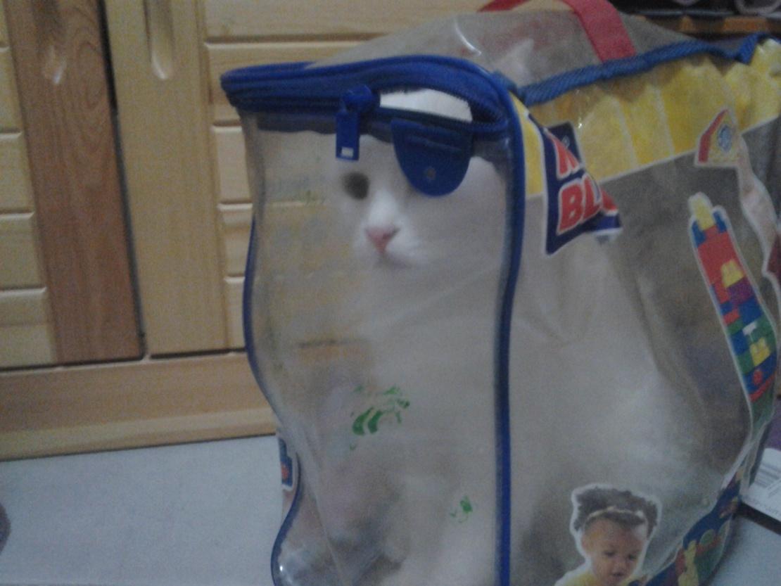 新型关猫袋,实用又不会被抓