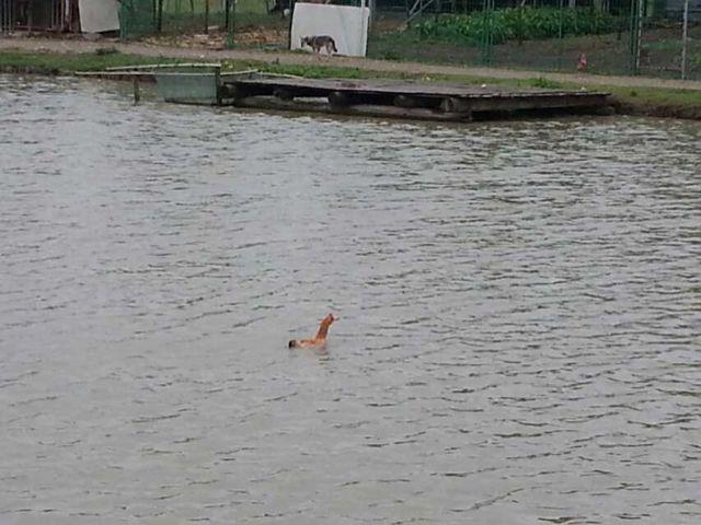 啊哈哈哈你让鸭要怎么活