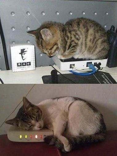 终于知道解调器为什么叫猫了…