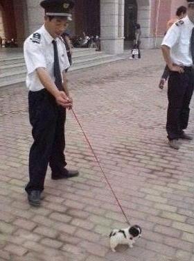 公司刚给保安配的狗,都说是牧羊犬。。。。。      话说这狗发怒二个人都拉不住。。。。。。。。。。