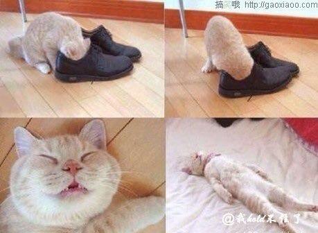 我的猫咪你是咋么啦?
