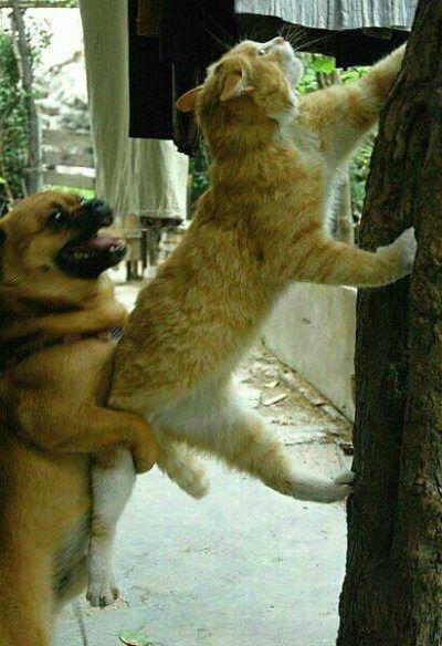 人生路上,当你努力往上爬时,总有几个狗日的,把你拼命往下扯!