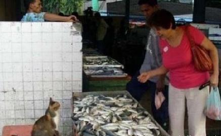 老板鱼咋卖的啊?不卖,自己吃的。拿出来显摆显摆