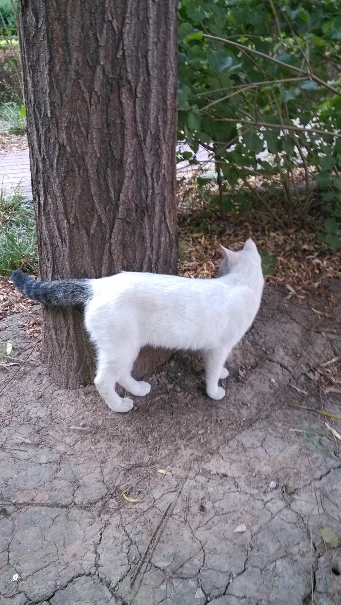 小猫,你捡了谁的尾巴?