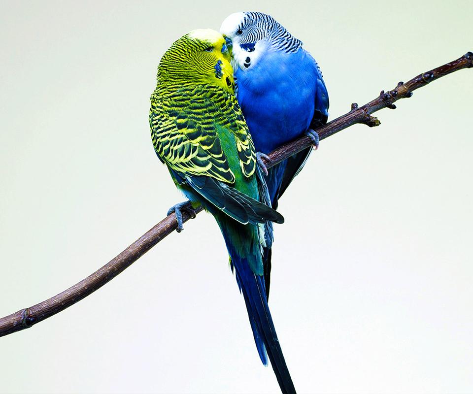 哇,太浪漫了。你自来看一看吧!一只小鸟,二只小鸟,三只小鸟,小鸟电动车。