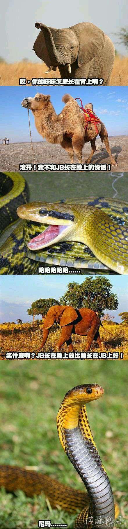 哈哈,我要是那只蛇我就去撞屎。。