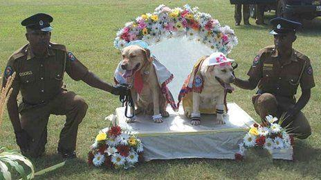 超有爱,斯里兰卡警方为警犬举行了婚礼